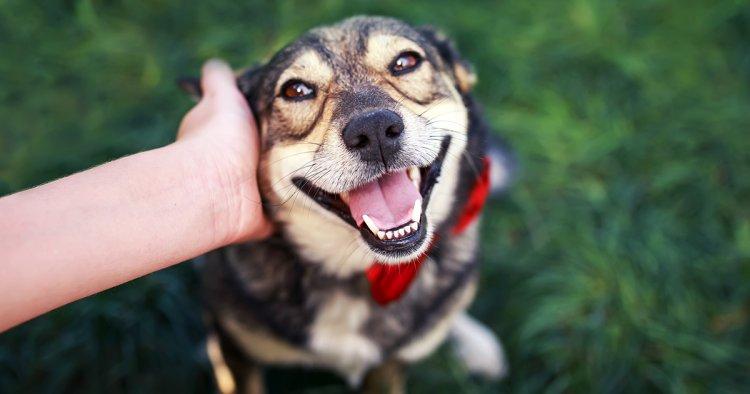 Come non far tirare il cane al guinzaglio